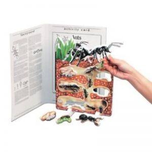 Book Plus Foom Model: Food Cycle of An Ant