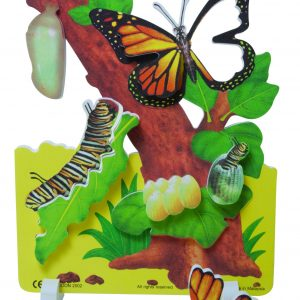 Book Plus Foam Model: Life Cycle of A Butterfly