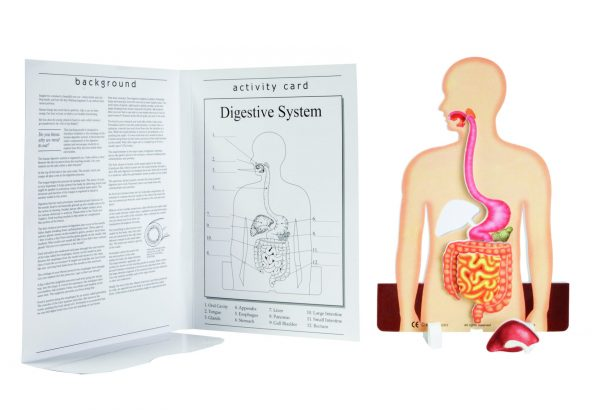 Book Plus Foam Model: Digestion