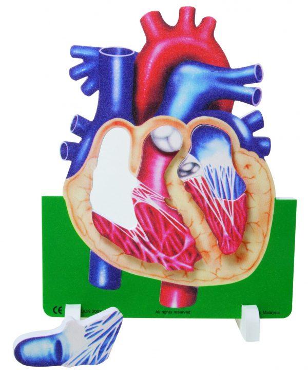 Book Plus Foam Model: Heart