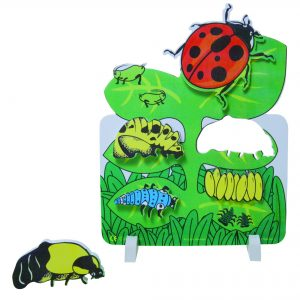 Book Plus Foam Model: Lifecycle of A Ladybug