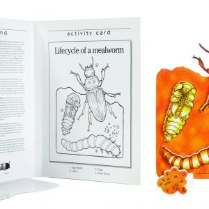 Book Plus Foam Model: Lifecycle of A Mealworm