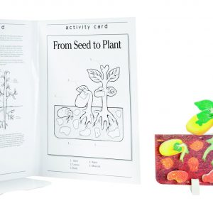 Book Plus Foam Model: Seed to Plant