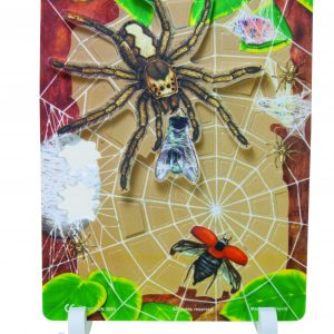 Book Plus Foom Model: Food Cycle of A Spider